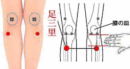 画像:生理痛を解消するツボ「足三里」