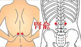 画像:生理痛に効果的なツボ「腎兪」