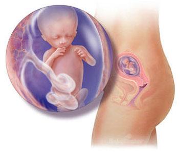 妊娠4ヶ月|たまひよ【医師監修】妊婦の ...